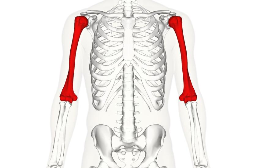 liga raumenų sąnarių