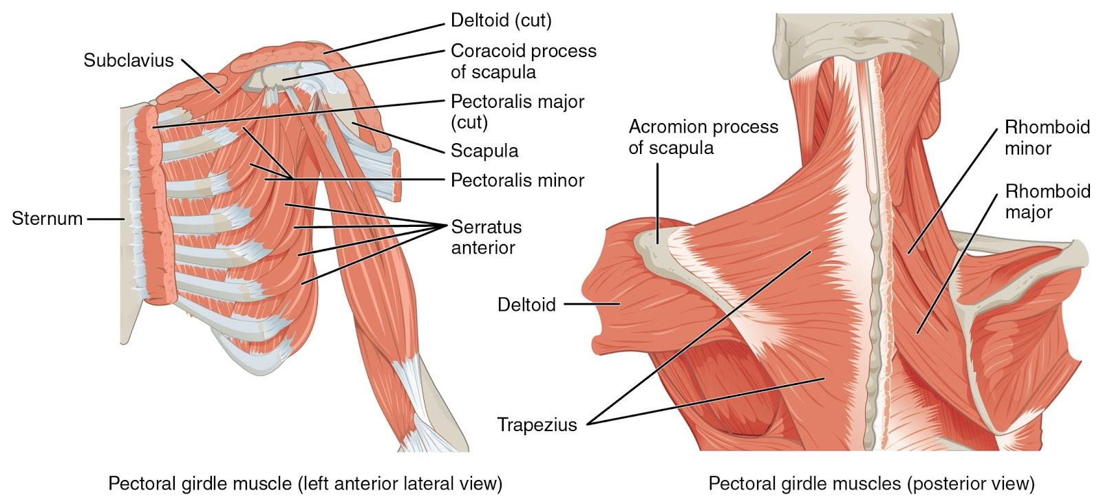 po traumos skauda sąnarius artrozė iš röbebe sąnarių