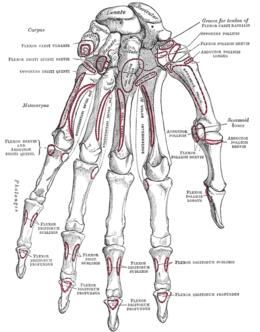 kaulų ir sąnarių į nykščio skauda plasmolifting sąnarių artrozės