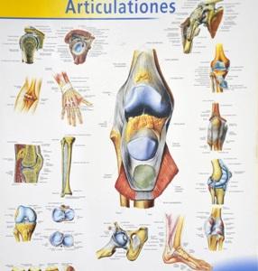 gydymas artrozės ir criste sąnarių