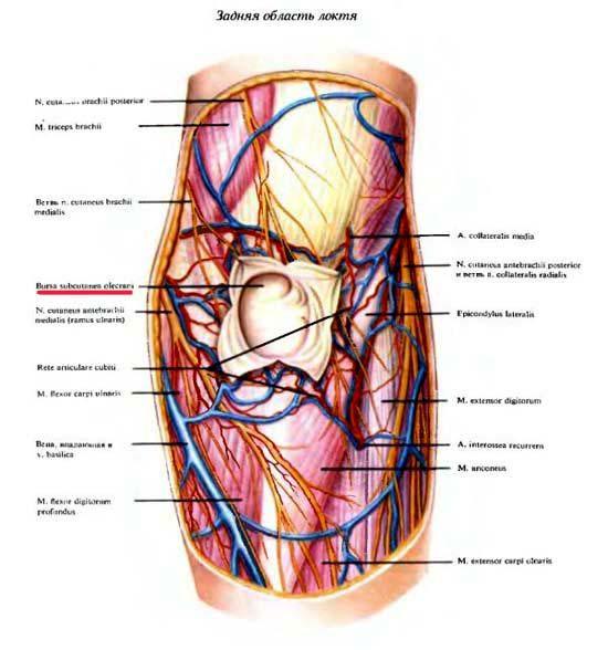 peties sausgysles uzdegimas bendra gydymas osteoartrito pirštų