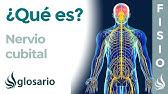 siurbimo nervo peties sąnario gydymo namuose ligos jungtinio alkūnės