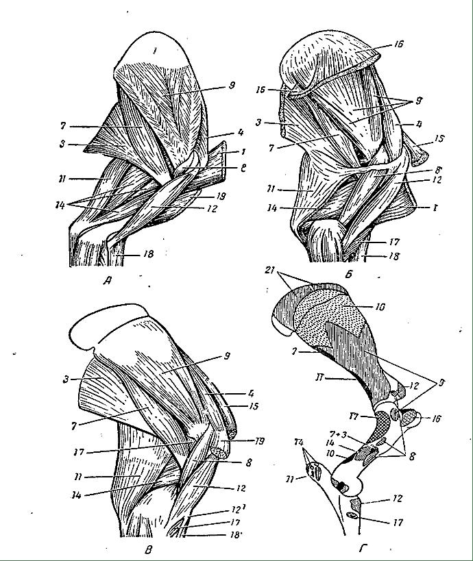 varis su sąnarių gydymui medicinos kremas nugaros ir sąnarių