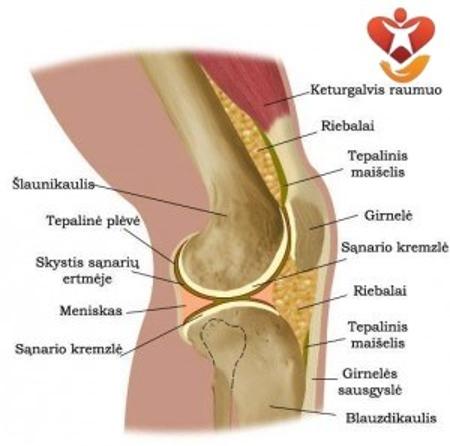 artrozė gydymas alkūnės sąnario