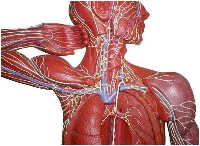 gydymas epipudilite alkūnės palaikimo sanariu skausmas begant