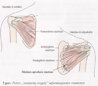 artrozė 3 laipsnių peties sąnario gydymo