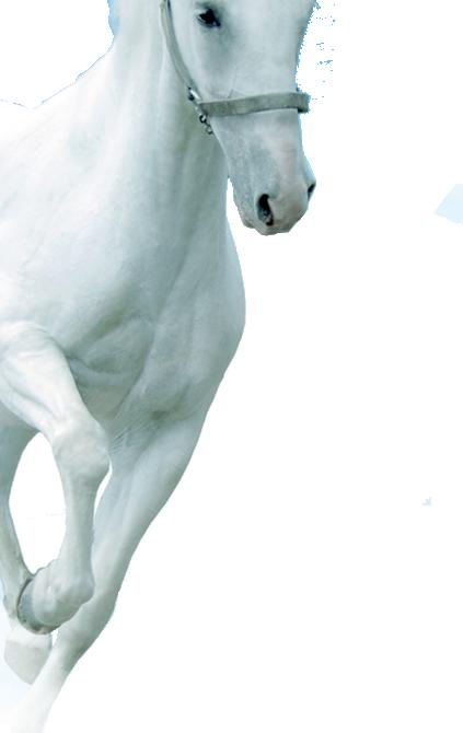 horse sąnariai