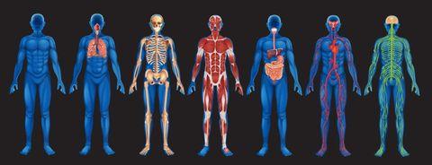 gydymo osteomielito sustava