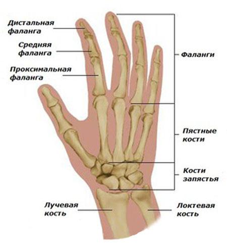 artritas falanga pirštų