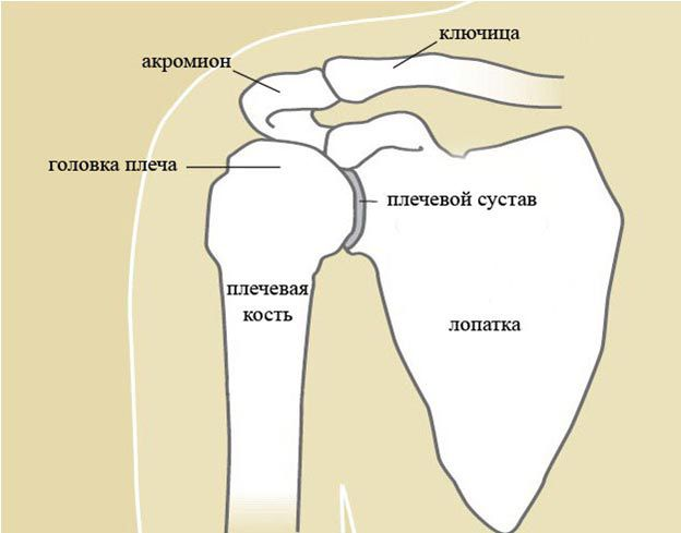 liaudies metodas gydymas pečių sąnarių