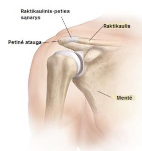 priešgaisrinės gydymas artrozė gerklės sąnarių ir suskirstyti