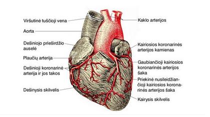ox oxochondrosis tepalas atsiliepimai artrozė ir artrito pirštų sąnarių