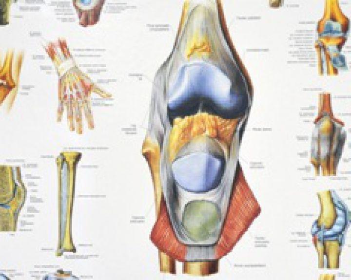 regeneravimas kremzlinio audinių tabletės pašalinti uždegimą sąnariuose
