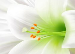 gydymas baltųjų lelijų sąnarių artrozė įdėkite gydymas