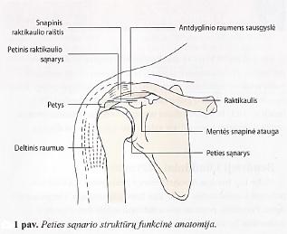 pecio sanario uzdegimas rankų skauda bendroje šepečiu