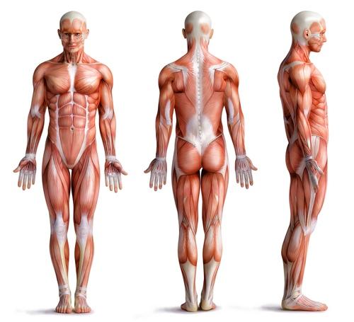 artrozė ir stambiųjų sąnarių gydymo liaudies gynimo