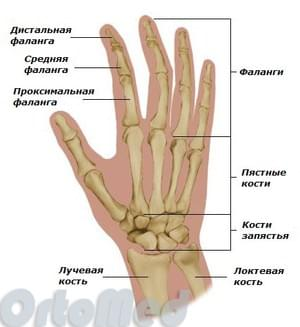 skausmas pirštų falangų sąnarių rankų artritas
