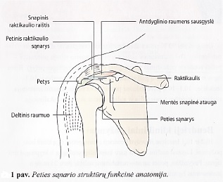 kai tepalas padėti osteochondrozės